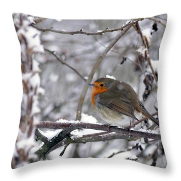 European Robin In The Snow At Christmas Throw Pillow