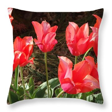 Even More Temple Beauty Tulips Throw Pillow