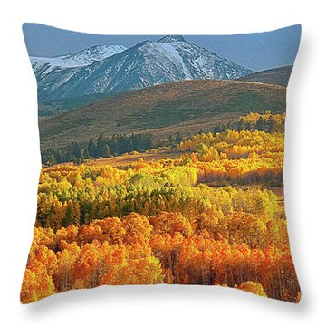 Evening Aspen Throw Pillow