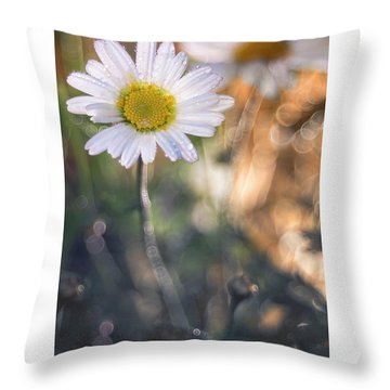 Evening Daisy Throw Pillow