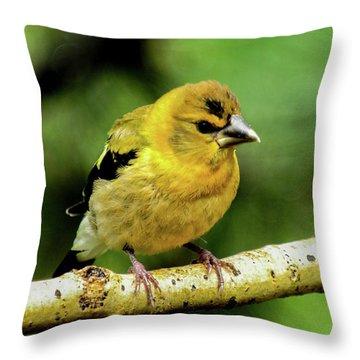 Evening Grosbeak Baby Throw Pillow