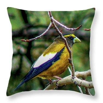 Evening Grosbeak On Aspen Throw Pillow