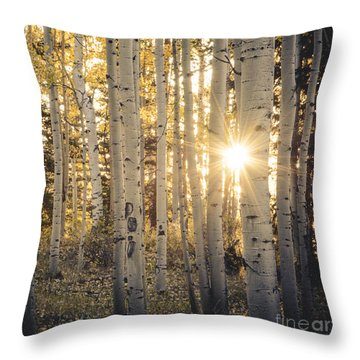Evening In An Aspen Woods Throw Pillow by The Forests Edge Photography - Diane Sandoval