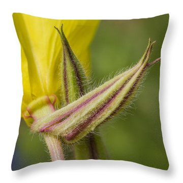 Evening Primrose Flower From Below Throw Pillow