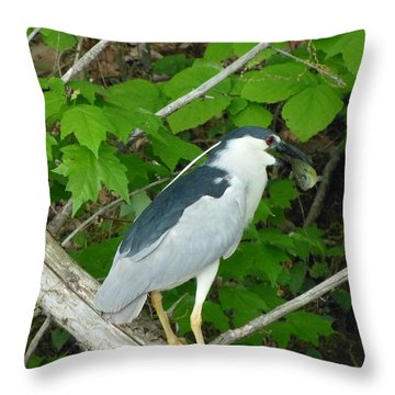 Evening Snack For A Night Heron Throw Pillow by Donald C Morgan