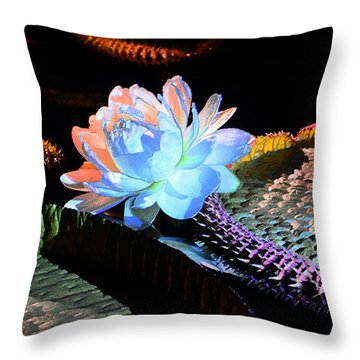 Evening Splendor Throw Pillow by Cindy Manero