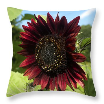 Throw Pillow featuring the photograph Evening Sun Sunflower #1 by Jeff Severson