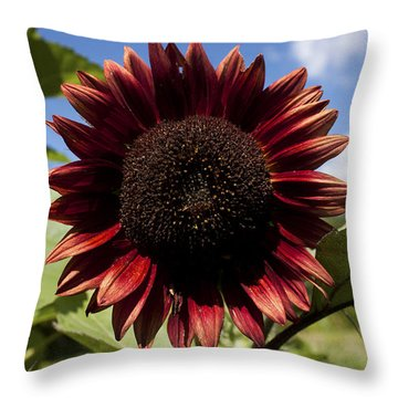 Throw Pillow featuring the photograph Evening Sun Sunflower #2 by Jeff Severson