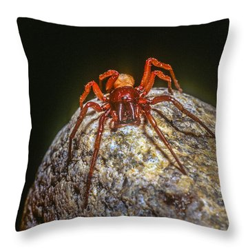 Somebody You Shouldn't Mess With Throw Pillow