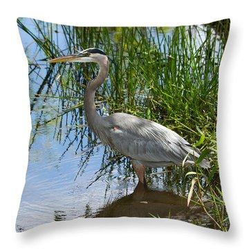 Everglades 572 Throw Pillow