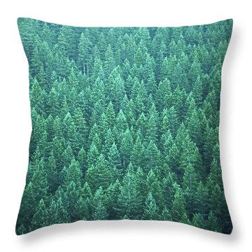 Evergreen Throw Pillow by Laurie Stewart