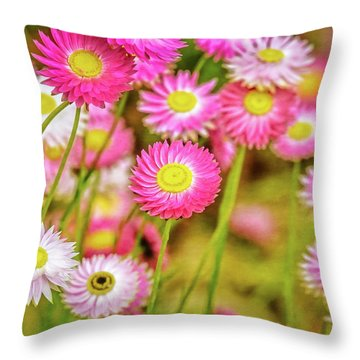 Everlasting Daisies, Kings Park Throw Pillow by Dave Catley
