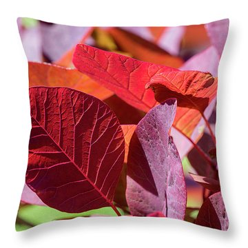 Throw Pillow featuring the photograph Everything Is Extraordinary by Linda Lees