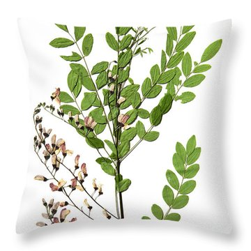 Eve's Necklace Throw Pillow