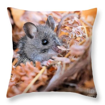 Evicted To The Wilds Throw Pillow
