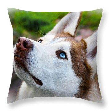 Expressive Siberian  Husky Photo C62017 Throw Pillow