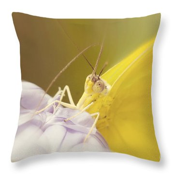 Eye Contact Throw Pillow