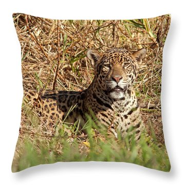 Eye Contact With Jaguar Throw Pillow by Aivar Mikko