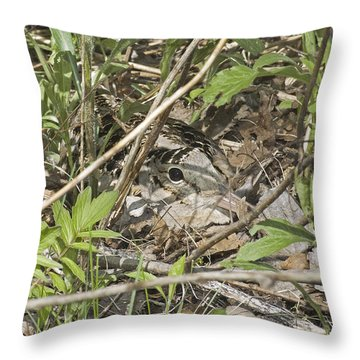 Eye-contact With The Nesting American Woodcock Throw Pillow