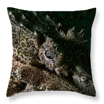 Eye In Eye Throw Pillow by Joerg Lingnau