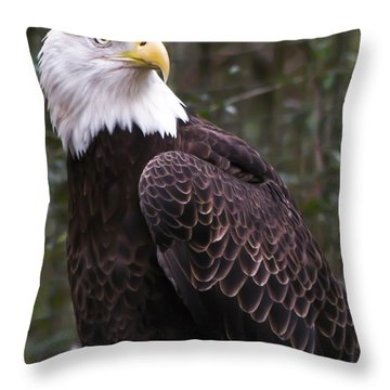 Eye Of The Eagle Throw Pillow by Trish Tritz
