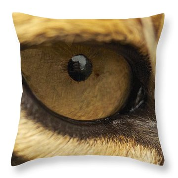 Throw Pillow featuring the photograph Eye On You by Gary Bridger