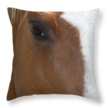 Eye On You Horse Throw Pillow