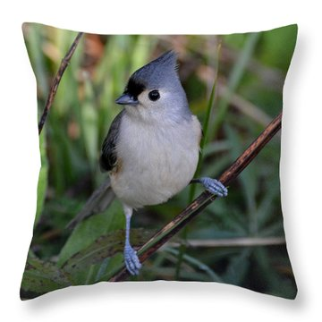 Eye Sparkle Throw Pillow
