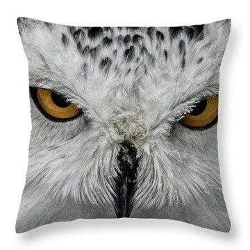 Eye-to-eye Throw Pillow