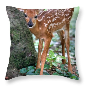 Eye To Eye With A Wide - Eyed Fawn Throw Pillow
