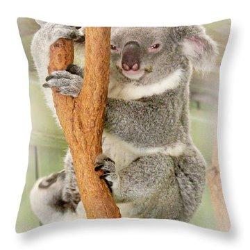 Eye To Eye With Mr. Koala Throw Pillow by Susan Vineyard
