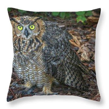 Eye To Eye With Owl Throw Pillow