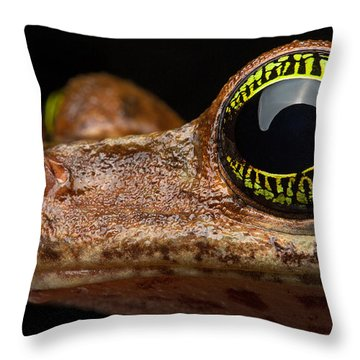 Eye Tropical Tree Frog Throw Pillow by Dirk Ercken
