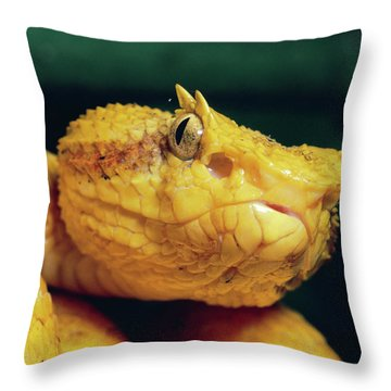 Eyelash Viper Bothriechis Schlegelii Throw Pillow by Michael & Patricia Fogden