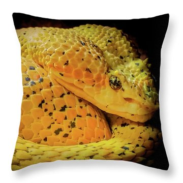 Eyelash Viper Throw Pillow by Karen Wiles