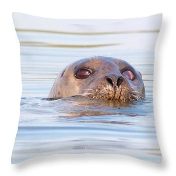 Throw Pillow featuring the photograph Eyes Of Doubt by Debbie Stahre