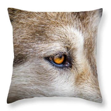 Throw Pillow featuring the photograph Eyes Of The Gray Wolf by Teri Virbickis
