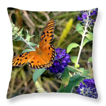 Throw Pillow featuring the photograph Eyes On A Butterfly by Sue Melvin