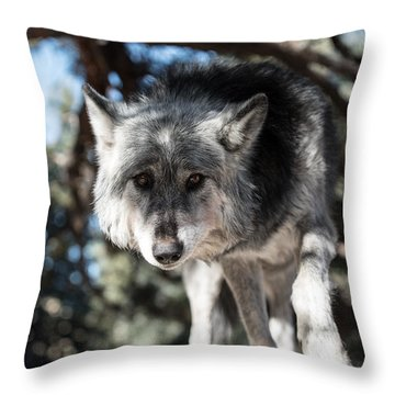 Eyes On The Prize Throw Pillow