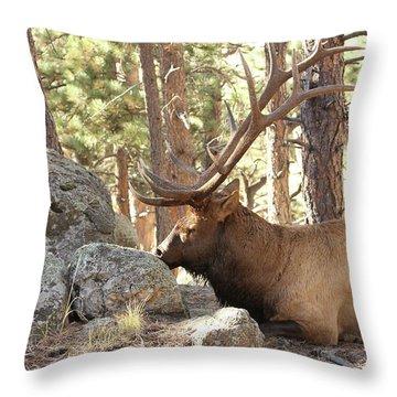 Faabattlescarredbull001 Throw Pillow