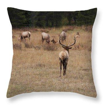 Faabullelk113rmnp Throw Pillow