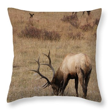 Faabullelk114rmnp Throw Pillow