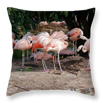 Fabulous Flamingos Throw Pillow