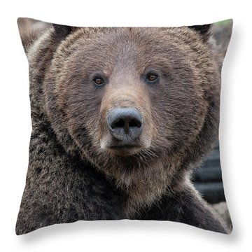 Face Of The Grizzly Throw Pillow