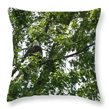 Face The Eagle Throw Pillow by Donald C Morgan