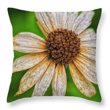 Faded Cone Flower Throw Pillow