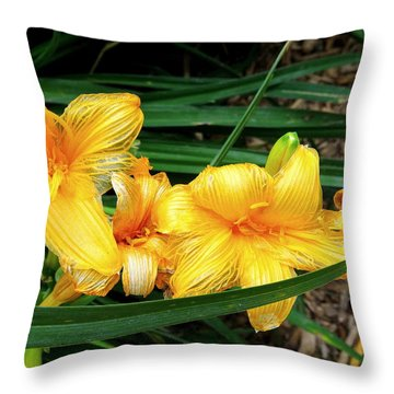 Fading Daffodils Throw Pillow