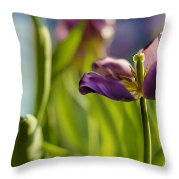 Fading Glory Throw Pillow