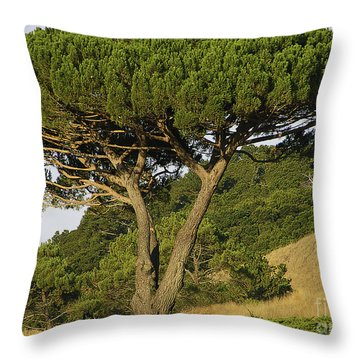 Fairfax Beauty Throw Pillow