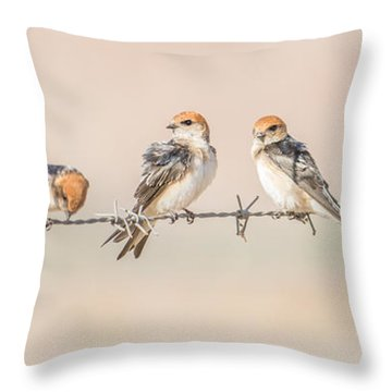 Fairy Martins Throw Pillow